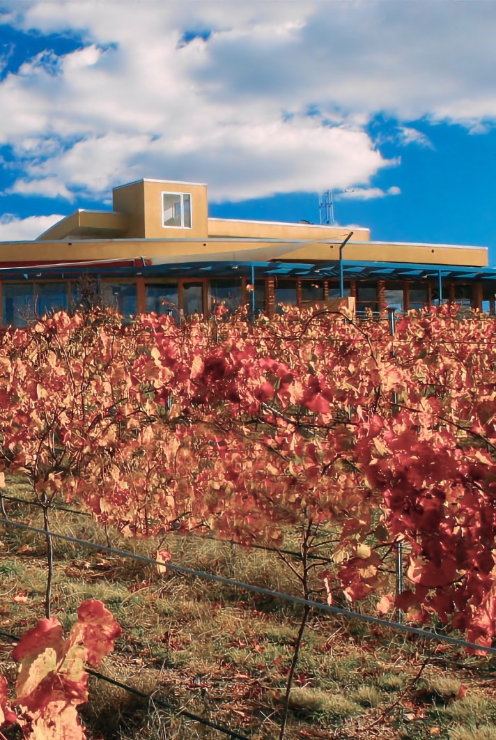 Vineyard leaves with cellar door in the background.